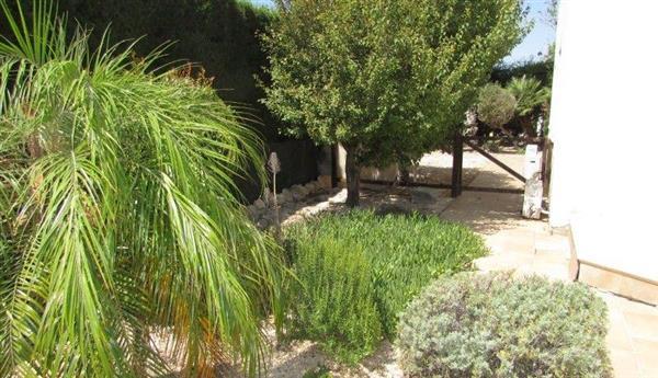 Back garden in good shape